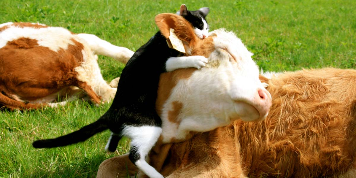 Tier-Haltung - Katze & Kuh