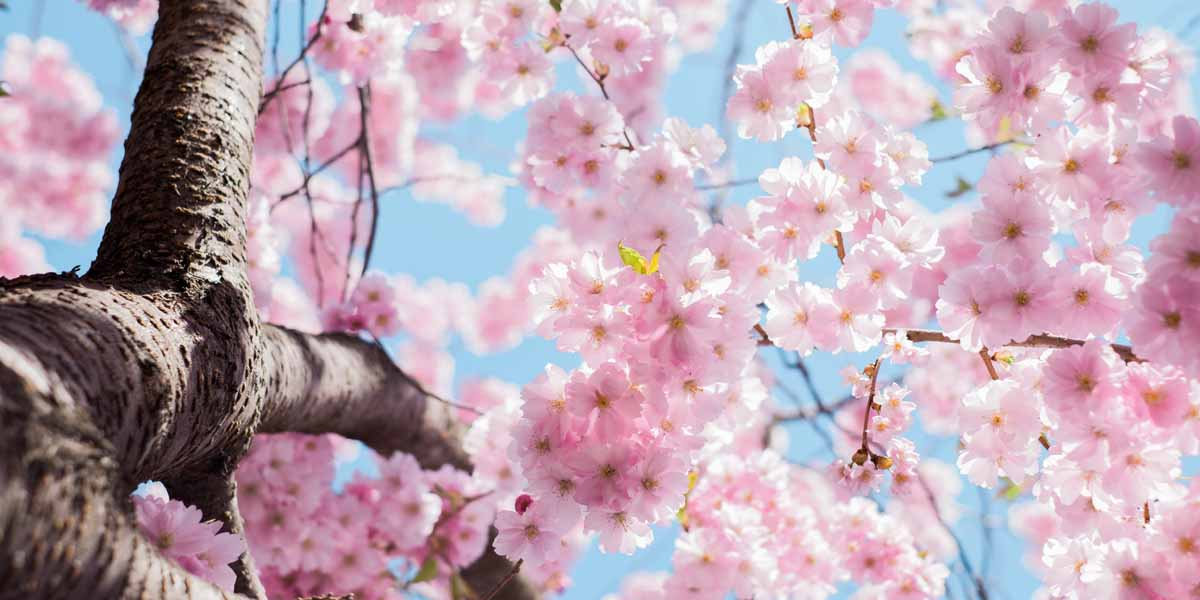 Frühling - der Blog Achtsamkeit