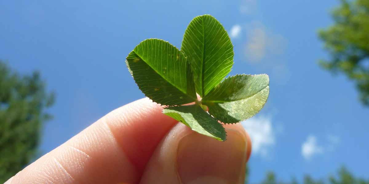 Glück - der Blog Achtsamkeit