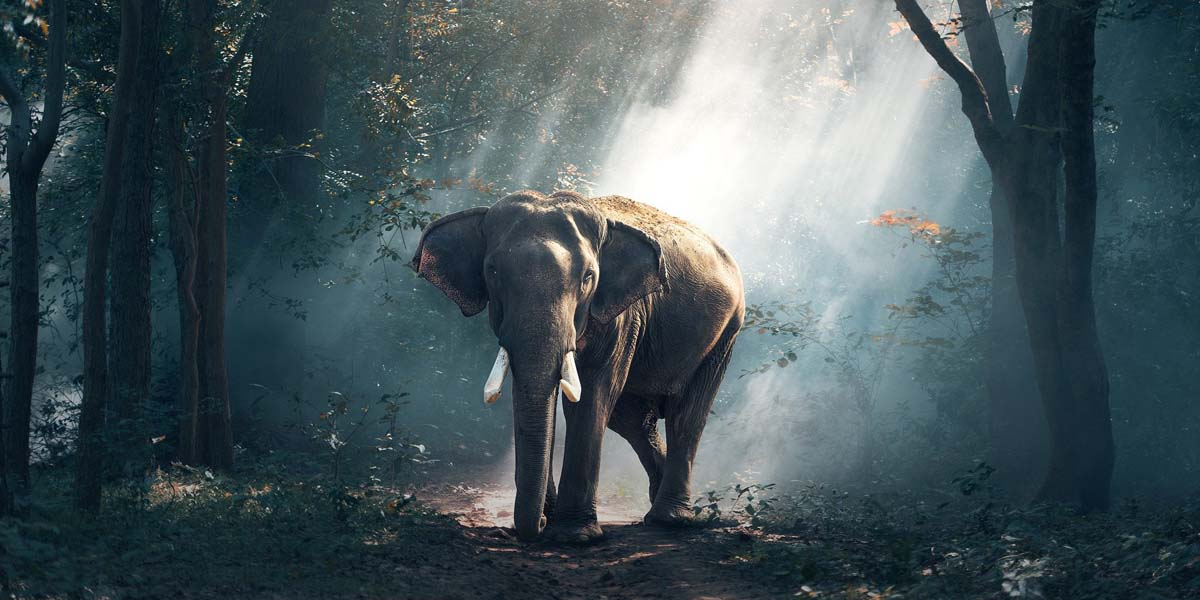 Achtsamkeit & Elefanten / Achtsamkeit4life