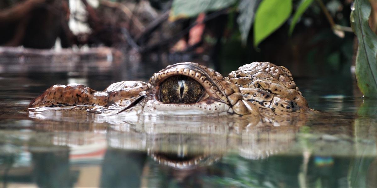 Krokodil - Achtsamkeit4life